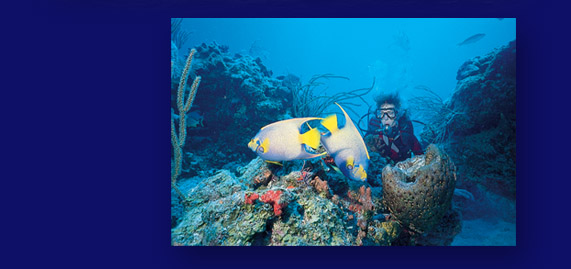 Underwater Photo of SCUBA Diver and fish